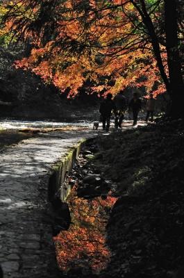 養老の滝 188